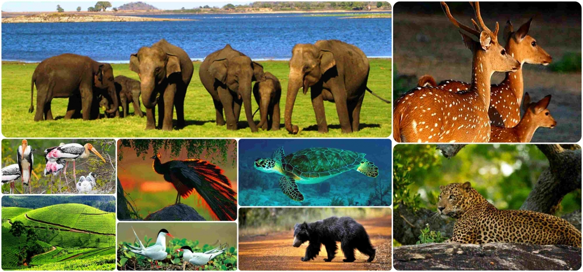Explore Wildlife Tour