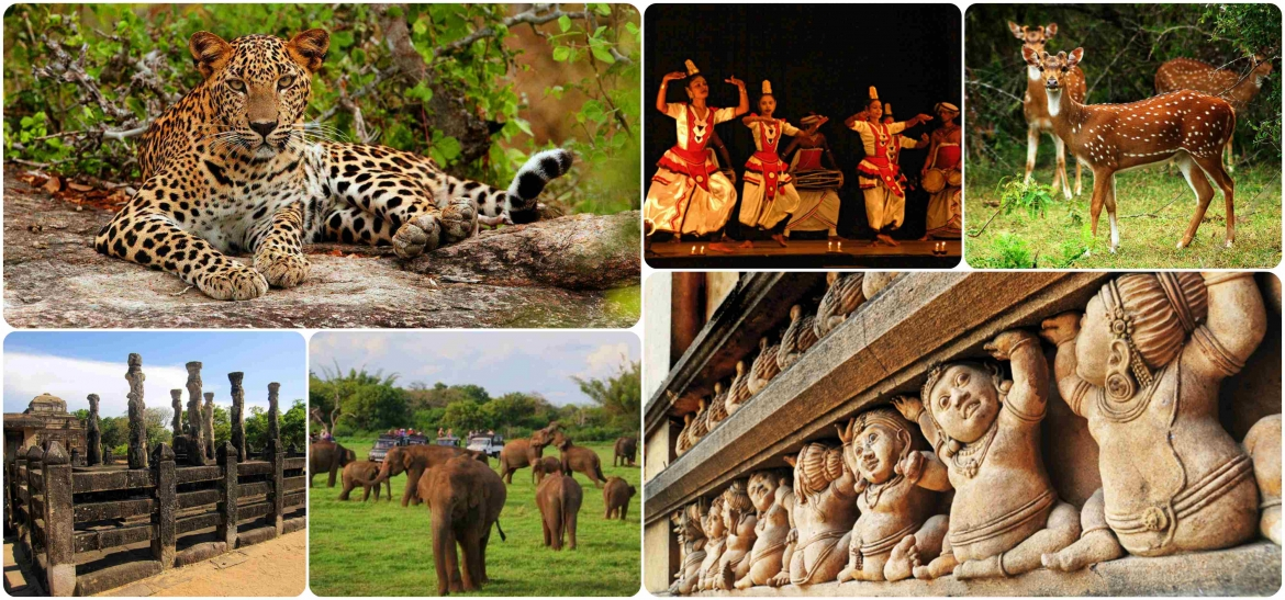 Cultural and Wildlife Tour
